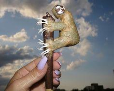 @tweedledoob #nationaljointleague #joints #codyvangogh #tweedledoob #cannabis #creativerolling #slothbae #ganja
