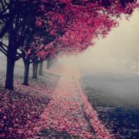 spring or autumn?