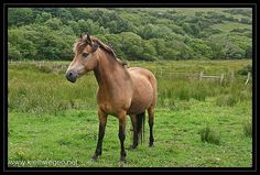 Horse - http://www.1pic4u.com/blog/2014/09/06/horse-12/