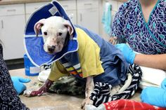 A 4-month-old puppy was set on fire and left to die. The puppy suffered second- and third-degree burns over almost half of her body. Demand justice for this innocent puppy.