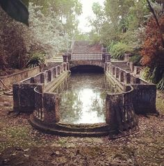 Gorgeous A mossy reflecting pool on an abandoned estate in Florida