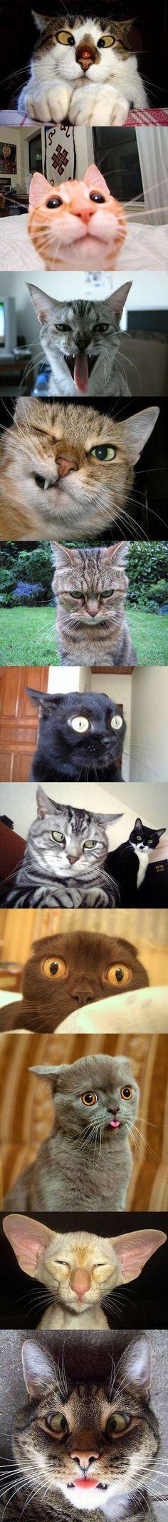 Gatos con caras graciosas.