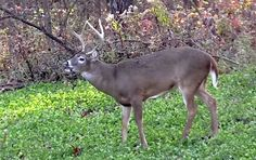 Learn how to attract deer to your property at all times during the season by offering them everything they need in one food plot.