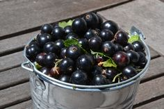 Black Currant Oil Has Amazing Health Benefits Oil Benefits, Health Benefits, Black Currant Oil, Antioxidant Vitamins, Black Currants, Essential Fatty Acids, Blueberry, Good Food, Cooking Recipes