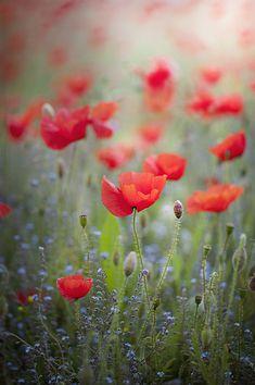 Resultado de imagem para wildflower