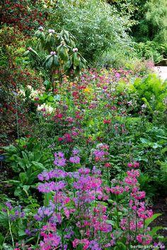 Wisley Garden: Etagenprimeln