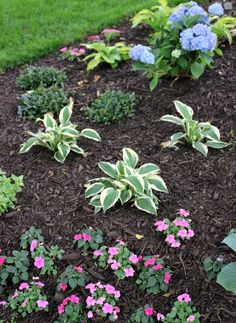 How To Choose And Apply Mulch to Your Flower Beds