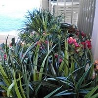 Outdoor Polyblend Planter Installations