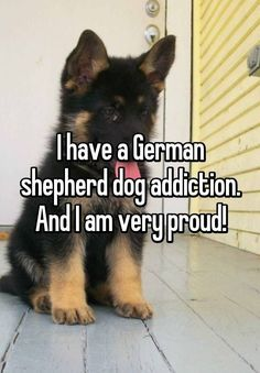 Just gotta love GSDs!                                                                                                                                                                                 More