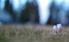 """Vuoden parasta aikaa ©Tmup: """"Kaikki kaunis puhkeaa kukkaan."""""""