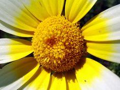 Cuore yellow