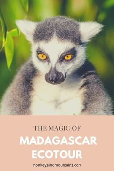 Enjoy the biggest adventure of your life on the Magic of Madagascar Ecotour Madagascar Culture, Madagascar Travel, Vacation Is Over, Dream Vacations, Old Trees, Winter Trees, Lemur, Scandinavian Christmas, Beach Trip