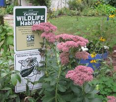 critters in the urban garden - Google Search