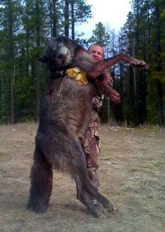 1000+ images about world records of wolves and cyotes on ...