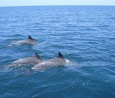 Dolphin Safari Tours in Costa Rica with ParklandsCostaRica.Com
