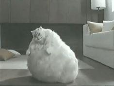 fat cat bouncing