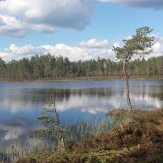 #jøstjernet - photos Instagram Tjennrunden. Løten. Mosjømarka. http://ut.no/kart/?lat=60.8435766258695&lng=11.4126638200969&zoom=15&ao=2.4410