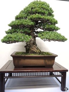 http://www.bonsaiempire.com/gallery/2013