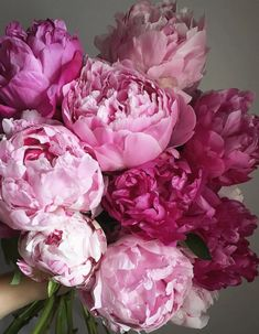 bouquet of peonies in cerritos ca cerritosflowers Peony Bouquet Inspiration for You - CowlesNCP ~ Make your Wedding Ideas All Flowers, Beautiful Flowers, Wedding Flowers, Purple Wedding, Floral Flowers, Peonies Bouquet, Pink Peonies, Flores Wallpaper, Spring Blooms
