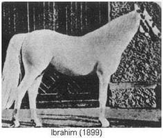 Ibrahim, sire of Skowronek