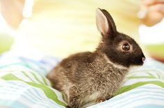 crazy cute bunny!