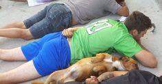 Cão se deita ao lado de suspeitos durante abordagem policial em SC