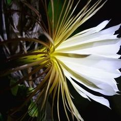 Orchid Cactus, Brian Williams, Plant Catalogs, Orchids, Plant Leaves, Photo And Video, Cousins, Flowers, Nature