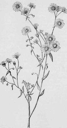 wildflower tattoo                                                                                                                                                     More