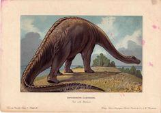 1902 dinosaur rare antique print - diplodocus carnegiei