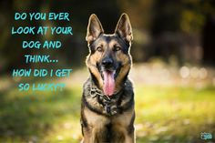 Take proper care of your dog with these German Shepherd facts. If you own or are thinking about owning a German Shepard, you need to know these German Shepherd dog-care facts. Plus, get our must-have gifts for every German Shepherd-lover. Best Guard Dog Breeds, Best Guard Dogs, Best Dogs, Service Dogs Breeds, Protective Dog Breeds, Smartest Dog Breeds, Dog Steps, Most Popular Dog Breeds, Smiling Dogs