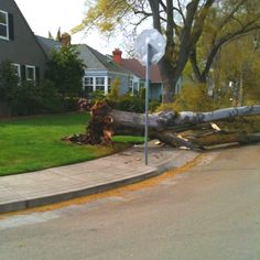 Tree fall over after Storm :(