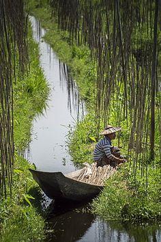 Floating Gardens, Inle Lake, Shan State, Myanmar (Burma), Asia