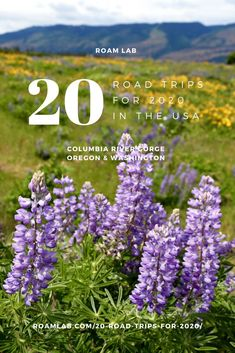 Celebrate 2020 with our 20 top road trips across America. See bison, hit a classic roadside diner, discover odd art sites, and drive on a beach. Badlands National Park, Grand Teton National Park, Rocky Mountain National Park, Yellowstone National Park, Mustang Island, Road Trip Across America, Visit Oregon, Surfside Beach, Oregon Washington