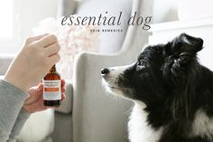 Essential Dog Grooming Skin Remedies for Sensitive Dogs | Pretty Fluffy