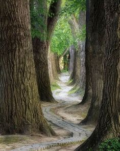 Forest Path, Tree Forest, Regensburg Germany, Tree Tunnel, Destinations, Belleza Natural, Vacation Trips, Travel Trip, Hawaii Travel