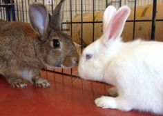 Complete Beginner's Guide to Rabbit Bonding - Everything You Need to Know