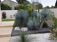 Plants, Jardin, Lawn Alternatives, Xeriscape, Garden