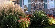 Landscaping with yuccas, and they are evergreen!