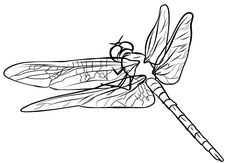 14 Best Dragonfly Crafts For Kids Images Dragon Fly Craft
