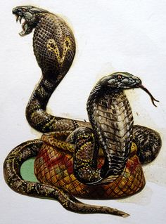 King Cobra (Original) by Harry Green at The Illustration Art Gallery