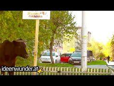 Werbung mit einer Kuh! Guerilla Marketing Restaurant