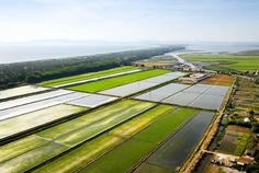 Rice Fields, Alcácer do Sal, Portugal