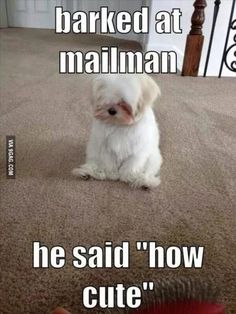 Top-30-Funny-animal-memes-and-quotes-funny.jpg (460×613)