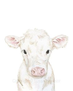White Calf Watercolor - Baby Cow