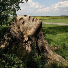 Woman's face carved in tree stump