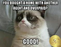 Meet Grumpy Cat memes that will make you LOL. Check Angry Cat Hate, Good and other popular memes. Check also for Grumpy Toad and Grumpy Turtle. Grumpy Cat Quotes, Gato Grumpy, Funny Grumpy Cat Memes, Funny Cats, Funny Memes, Grumpy Kitty, Fun Funny, Cat Jokes, Hilarious Jokes