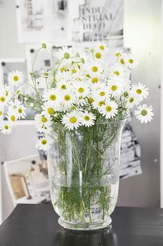Hopefully, all my daisies will grow so i'll have freshly cut daisies in my house this summer :-)