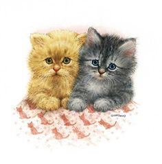 Belles illustrations  de chats