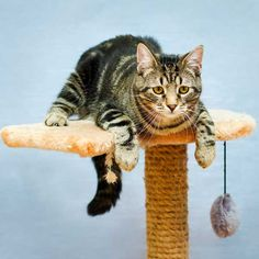 You can stop many unwanted cat behaviors before they begin by following these tips.