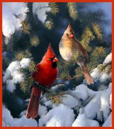 Cardinals ~V~